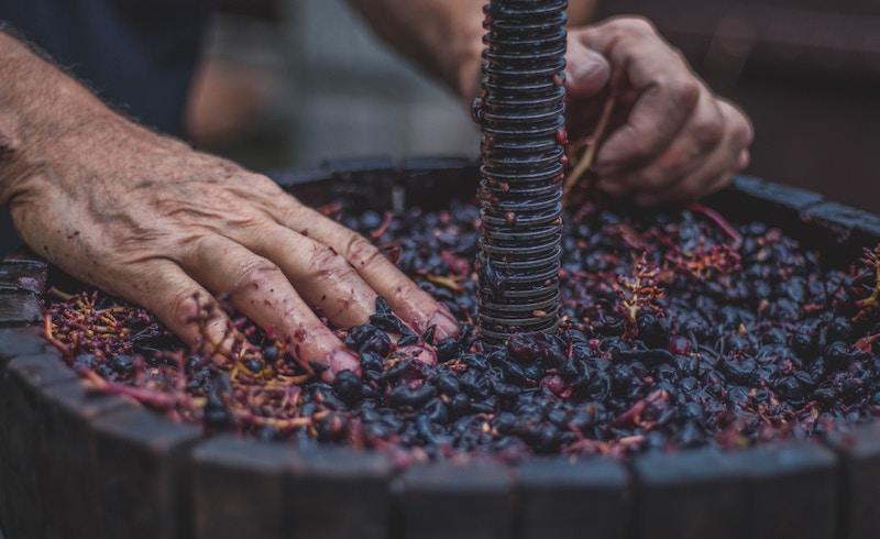 pigiatura vino rosso